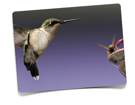 The Hummingbirds Of Berkshire County By Patricia Abt - Abt ipad